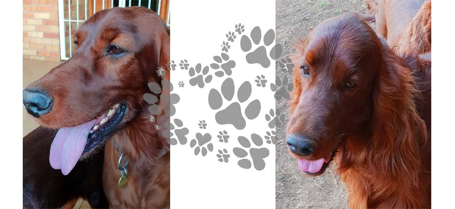 Flame x Bastiaan Puppies